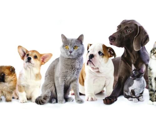 Sabato 7 Luglio: giornata promozionale Royal Canin